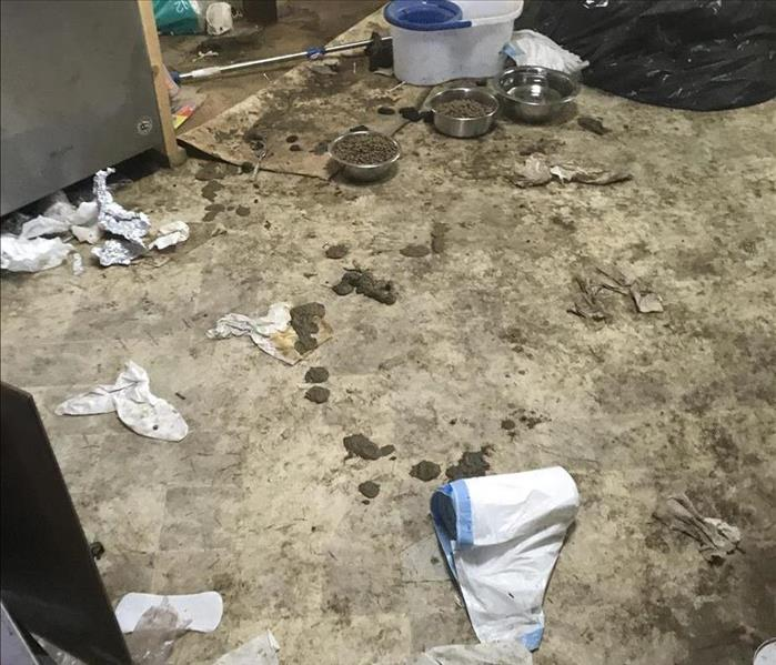 A kitchen floor covered in dog feces